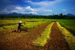 Wietnamski rolnik zdjęcia stock