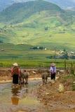Wietnamski rolnik, bydlę i bizon obraz stock