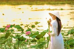 Wietnamskie kobiety zbierają lotosowego zmierzch zdjęcia royalty free