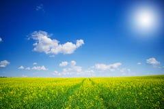 świetny cloudscape rapefield Zdjęcie Stock