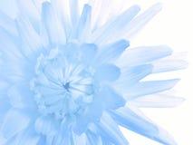 świetny kwiat Zdjęcia Stock