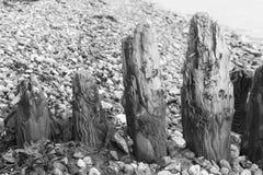 Wietrzejąca drewniana pachwina przy plażą obrazy royalty free