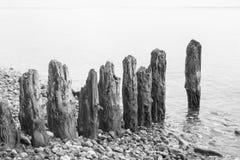 Wietrzejąca drewniana pachwina przy plażą zdjęcia royalty free