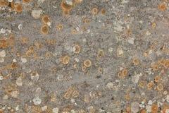 Wietrzejąca kamienna ściana z liszajem Fotografia Royalty Free