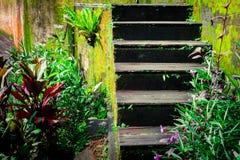 Wietrzejący drewniani schodki zaniechany tropikalny dom obrazy royalty free