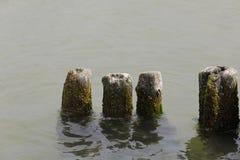Wietrzejący drewniany groyne w nawadnia na morzu bałtyckim Zdjęcia Stock
