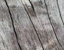 Wietrzeję solił drzewnego bagażnika makro- fotografię Obrazy Stock