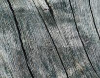 Wietrzeję solił drzewo nawierzchniową makro- fotografię Plażowa drzewna tekstura z pęknięciami Obrazy Royalty Free