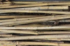Wietrzejący bambus Horizontally Zdjęcia Stock