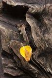 Wietrzejący liść i bela Zdjęcie Royalty Free