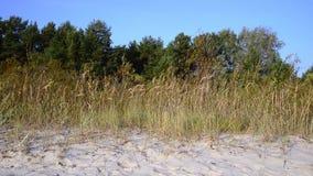 Wietrzny dzień w jesień lesie zbiory