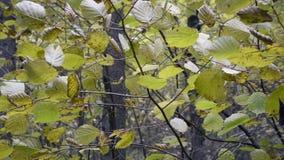 Wietrzny dzień w jesień lesie zbiory wideo