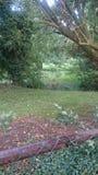 Wietrzny jesienny krajobraz Obraz Royalty Free