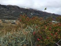 Wietrzny Patagonia kształtuje teren Argentyna zdjęcie stock