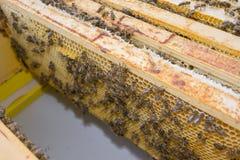 Wiev inside top bar hive. Frames close up stock photo
