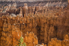 Wiew of Bryce Canyon Stock Photos