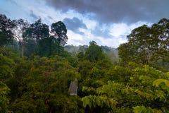 Wiew della foresta pluviale dalla torre della passeggiata del baldacchino in Sepilok, Borneo Fotografie Stock Libere da Diritti