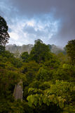 Wiew della foresta pluviale dalla torre della passeggiata del baldacchino in Sepilok, Borneo Immagini Stock