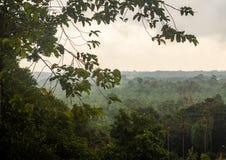 Wiew della foresta pluviale dalla torre della passeggiata del baldacchino in Sepilok, Borneo Fotografia Stock