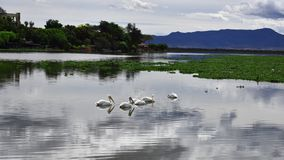 Wiew of the lake. Birds in the water, a distant hill, calm, clouds, peace Stock Photo