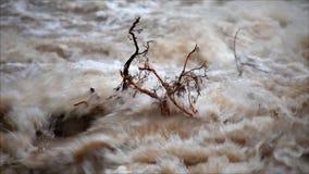 Wiew van detailm van tak op de waterspiegel die zich tegen het water verzet stock video