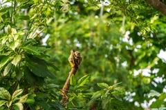 Wiewiórczej małpy obsiadanie na drewnie Zdjęcie Stock