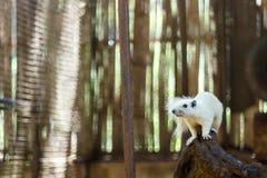wiewiórczy biel Zdjęcia Stock
