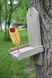 Wiewiórczy jedzenie Zdjęcie Royalty Free