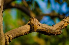 wiewiórka Zdjęcia Stock