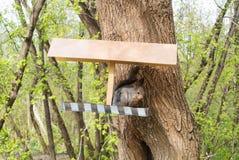 Wiewiórka i dozownik przy miasto lasu parkiem, żywieniowi dzikie zwierzęta przy miastem Moskwa Fotografia Stock