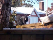 Wiewiórka jadł dokrętki w wintertime obrazy stock
