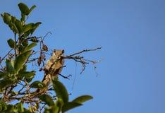 Wiewiórka ma odpoczynek po posiłku fotografia royalty free
