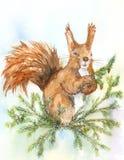 Wiewiórka na gałąź Obraz Stock