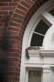 Wiewiórka na wypuscie Obrazy Royalty Free