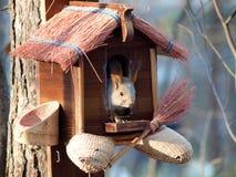 Wiewiórka w zoo w Novosibirsk Fotografia Stock