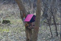 Wiewiórka wspina się drzewa w dozownika zdjęcia stock