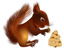 Wiewiórka z dokrętkami Obrazy Stock