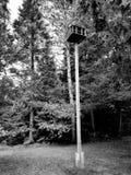 Wiewiórki stwarzają ognisko domowe zdjęcie royalty free