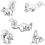 Wiewiórki w różnych pozycjach Ołówkowy nakreślenie ręką Obraz Stock