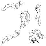 Wiewiórki w różnych pozycjach Ołówkowy nakreślenie ręką Zdjęcia Royalty Free