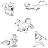 Wiewiórki w różnych pozycjach Ołówkowy nakreślenie ręką Obrazy Royalty Free