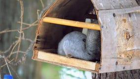 Wiewi?rka siedzi w ptasim dozowniku w naturalnym parku i je s?onecznikowych ziarna zdjęcie wideo
