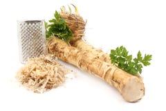 Świeży horseradish Obraz Royalty Free