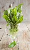 Świeży sorell w szklanej filiżance Zdjęcia Royalty Free