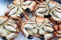 Świezi Angielscy owoców morza kraby przy Targowym pokazem Fotografia Royalty Free