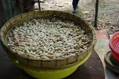 Świezi cacao ziarna Zdjęcie Stock