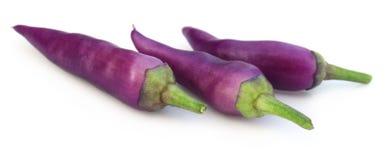 Świezi fiołkowi chili pieprze odizolowywający Fotografia Stock