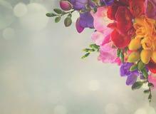 Świezi frezja kwiaty Fotografia Royalty Free