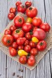 świezi grupowi pomidory Obraz Stock