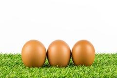 Świezi jajka na trawie Zdjęcia Royalty Free